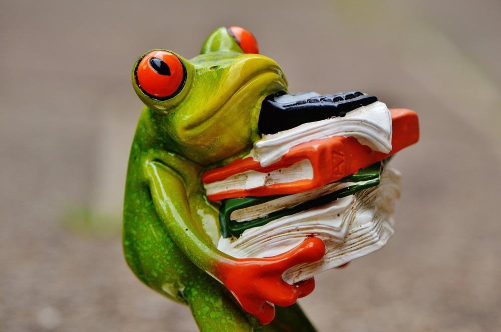 frog-1339897_1920 workload